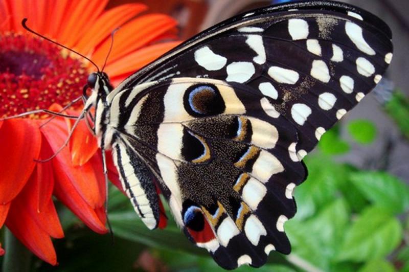 Миндо, сад живых бабочек, тропический комплекс